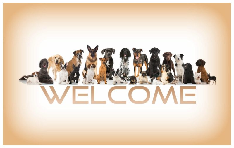 Welcome Dogs.