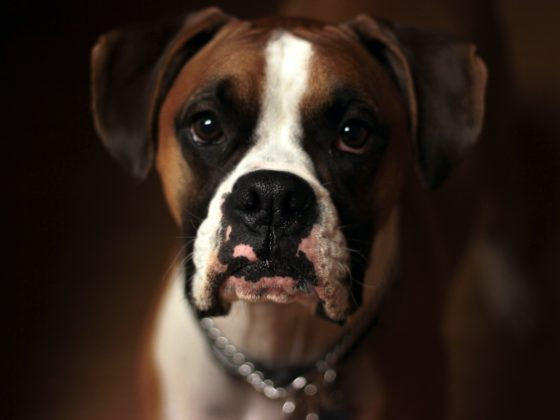 Selective Focus Photo Of Brown And White Puppy